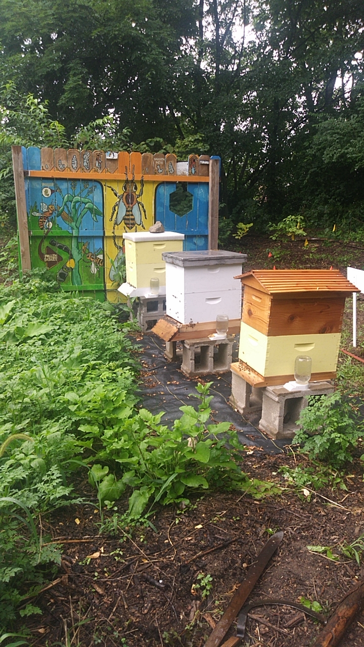 Mission of Mary Cooperative Urban Bee Habitat
